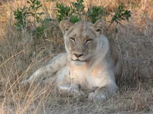 SAfrica2 223